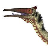 Pelecanimimus Dinosaur Head