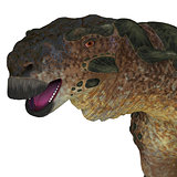 Pinacosaurus Dinosaur Head