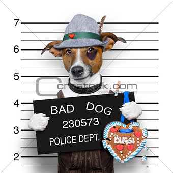 bavarian beer mugshot dog