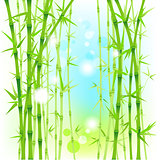 Bamboo fresh background