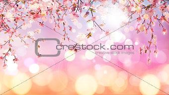 3D cherry blossom on bokeh lights background