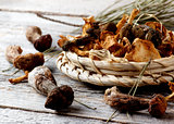 Arrangement of Dried Mushrooms