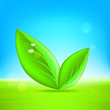 Green leaves. Vector 10 eps