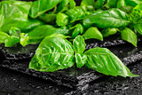 Basil leaves on a black slate