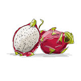 Dragon Fruit, pitahaya sketch for your design