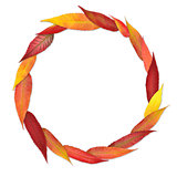 colorful leaves in a circle