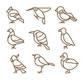 Bird Icons, Thin Line Style, Flat Design