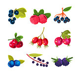 Juicy Colorful Berry Vector Set