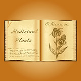 Echinacea. Botanical illustration. Medical plants. Book herbalist. Old open book
