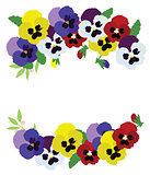 Vector pansies background