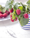 Fresh branch of raspberries in blue white stripped mug on table