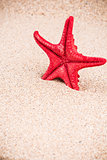 Red starfish on sandy seashore