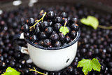 Fresh delicious organic black currant