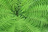 Pattern of fern leaves