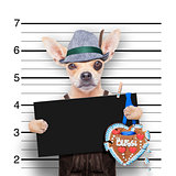 bavarian beer mugshot dog
