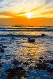 kelp at rocky beal beach