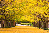 Tokyo, Japan Autumn Park