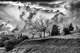 Winter BW photo of cloudy dramatic sky with trees