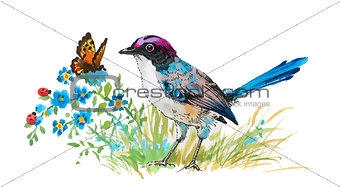 Watercolor colorful Bird and butterfly with grass and flowers.