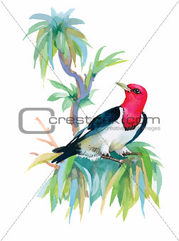 Watercolor colorful Bird on branch with green leaves.