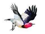 Watercolor colorful flying Bird on white background.