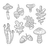 Black and White Acorns, Leaves, Berries, Handdrawn Style. Vector illustration.