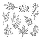 Set of Leaves and Branches in Handdrawn Style, Vector Illustration