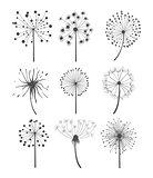Monochrome Dandelion Set Vector Illustration