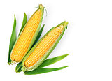 Corn corncob with green leaves ripe vegetables