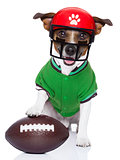 funny american football rugby dog