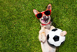 dog plays with soccer ball