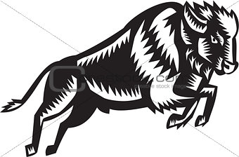 American Bison Buffalo Jumping Woodcut