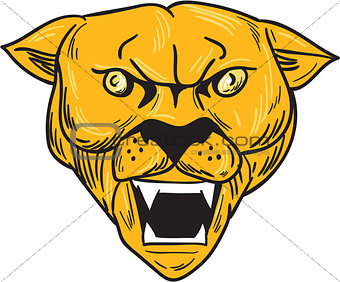 Angry Cougar Mountain Lion Head Drawing