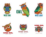 Set of colorful owl logo templates