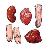 isolated set of pig organs