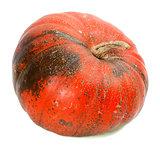 Red ripe pumpkin