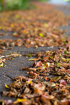 autumn leaves on a city pavement