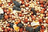 Bird Seed Extreme Macro