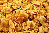 Corn Flake Close Up