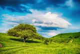 Summer landscape with few trees on the grassy hillside meadow ne