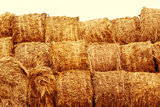 Hay bales on the field at summer