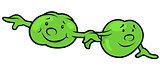 Green Pea Beans