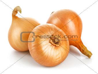 Three fresh onions harvest vegetable, isolated white