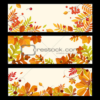 Autumn Banners with Berries and Leaves, Vector Illustration