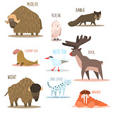 Arctic and Antarctic Animals, Birds. Vector Illustration