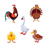 Poultry Domestic Birds, Vector Illustration Set