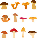 Mushroom, edible and inedible mushrooms