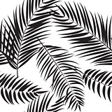 Beautifil Palm Tree Leaf  Silhouette Seamless Pattern Background