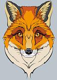 orange wild fox