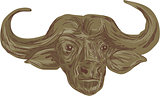 African Buffalo Head Drawing